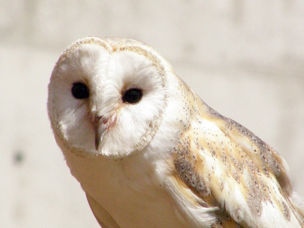 Lee Ecology Barn Owl Surveys In Cornwall Devon And Cornwall
