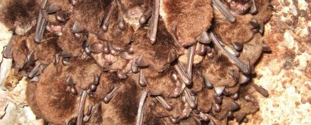 Bat Surveys Devon and Cornwall